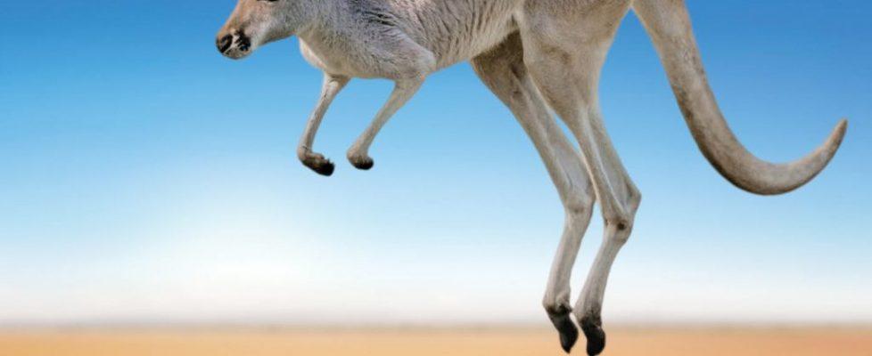 Le-Basour-Jump
